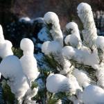 Winterliche Fingerzeige