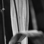 Licht und Schatten eines Schilfblattes