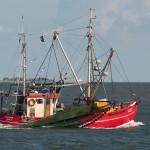 Krabbenfischer vor Hallig Hooge