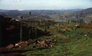 Teeplantagen in den Nilgiris