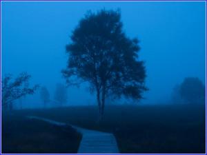 Blaue Stunde im Brackvenn