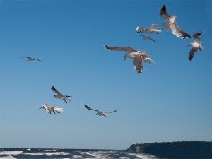 Sturmvögel