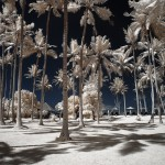 Kokosplantage