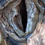 Das Auge Saurons