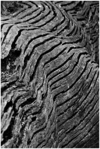 Walhaut-Baum