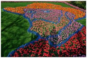 4/ 2017 Pflanzen und Pilze